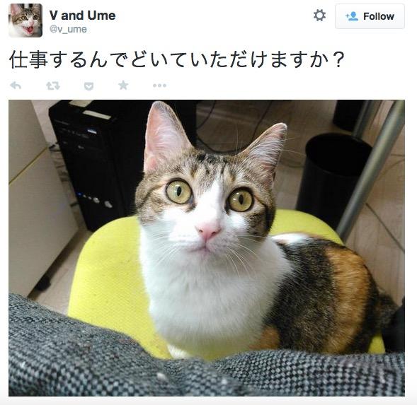 giappone-bonus-dipendenti-lavoro-con-gatto2