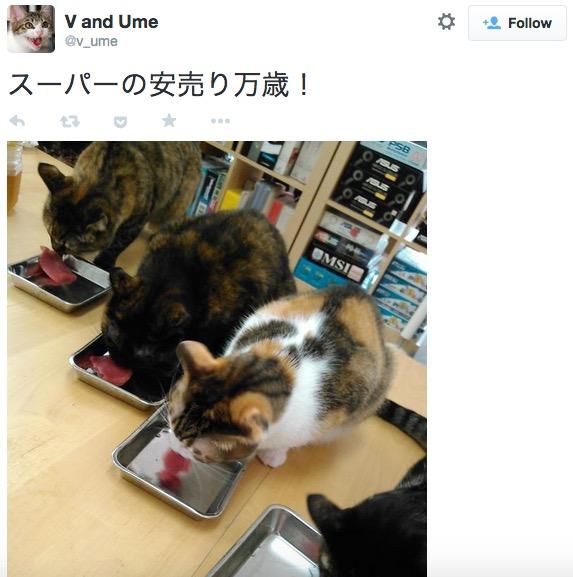 giappone-bonus-dipendenti-lavoro-con-gatto4