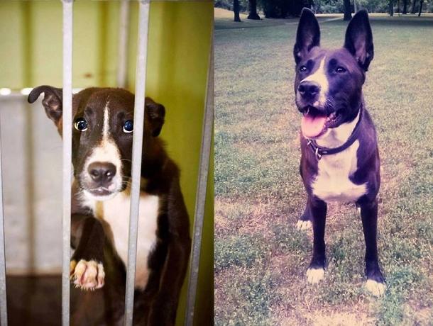 cani-adozione15