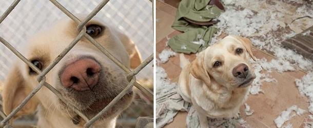 cani-adozione2