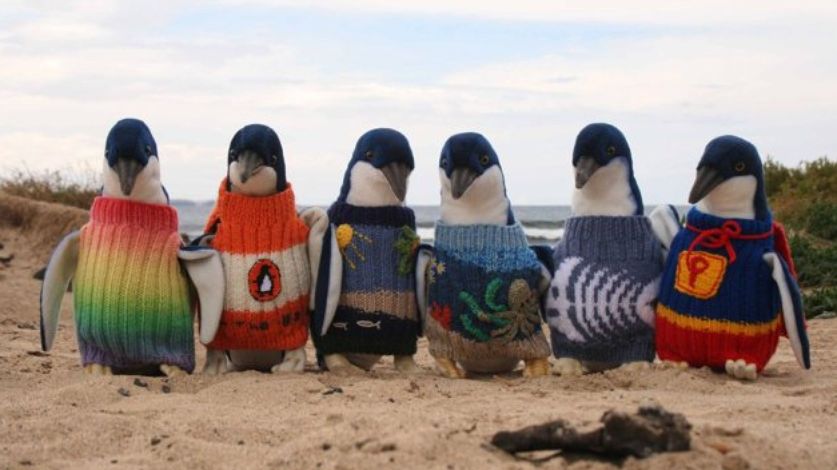 pinguini2