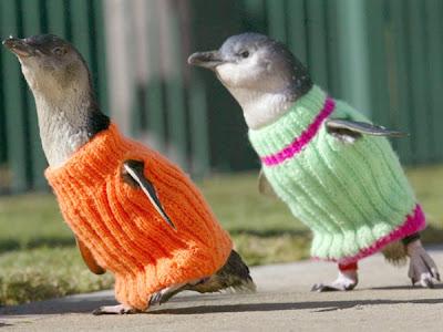 pinguini5