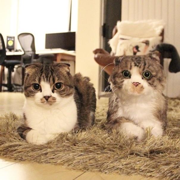 toys-cuddle-clones16