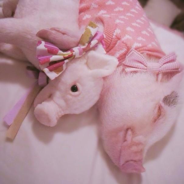 toys-cuddle-clones3