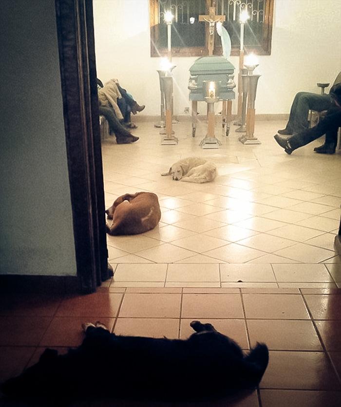 cani-randaggi-funerale1