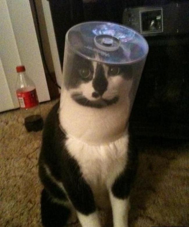 gatti-scemi1