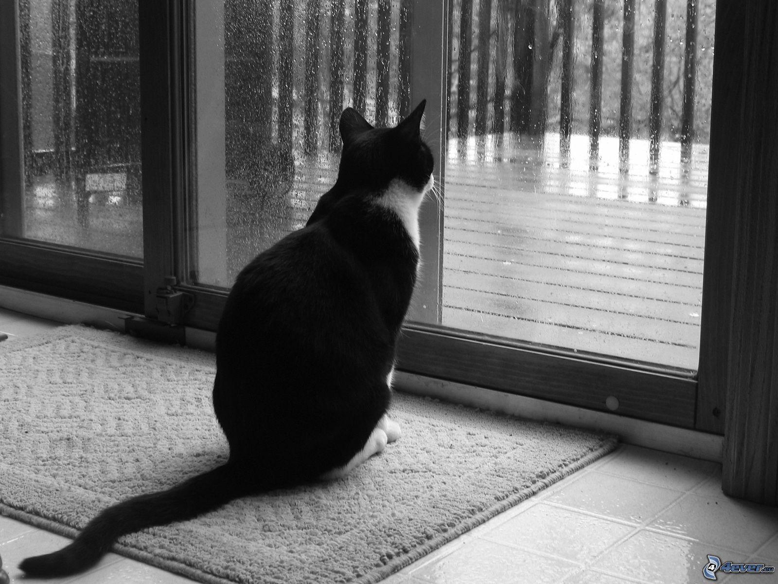 gatto-alla-finestra-152680