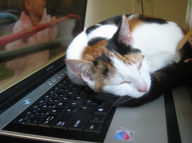 gatto2