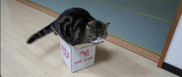 gatto8