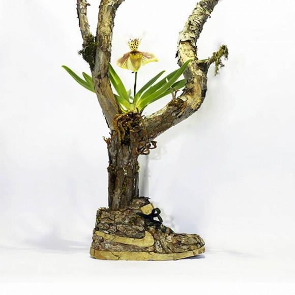 monsieur-plant8
