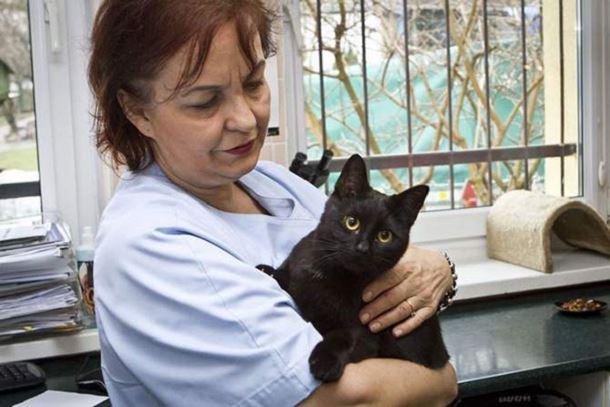 gatto-infermiere1