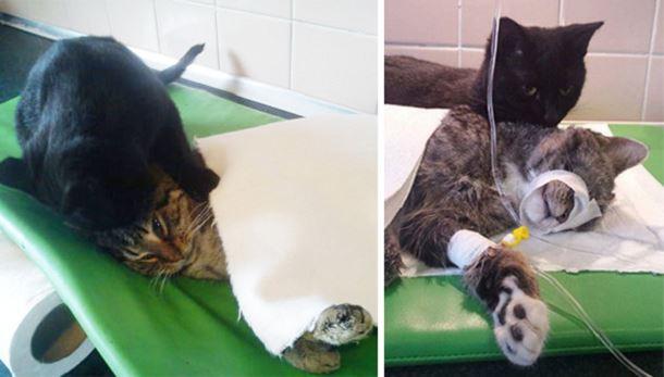 gatto-infermiere2