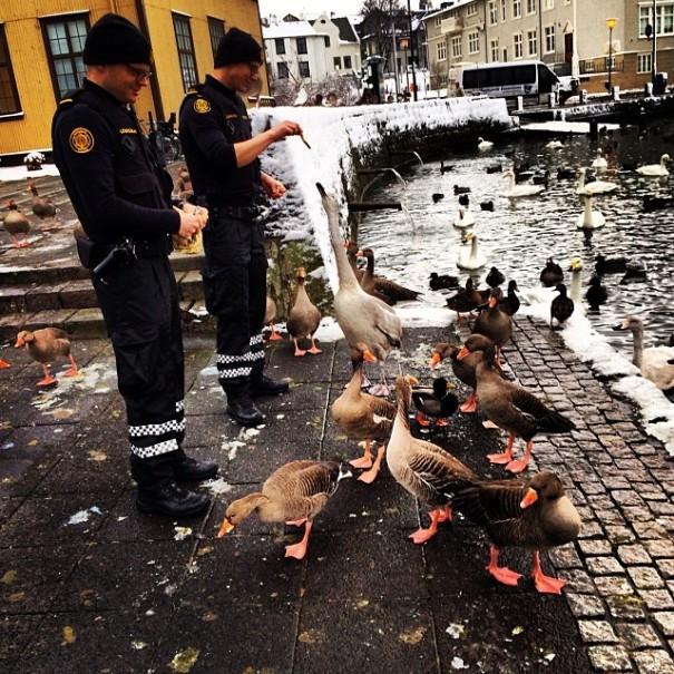 instagram-police-islanda7