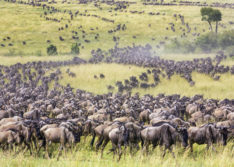 Kenya, Narok County, Masai Mara National Reserve.