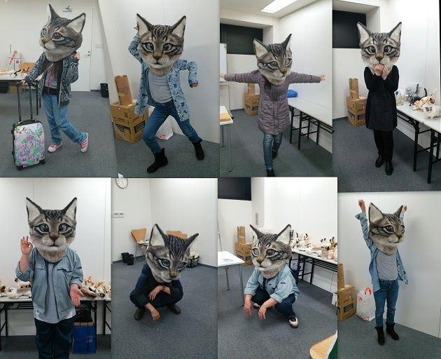 testa-di-gatto3