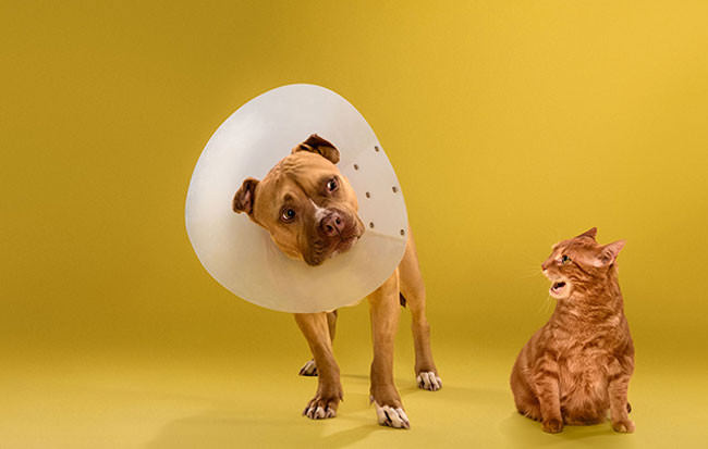 Adorable-portraits-show-how-dogs-despise-wearing-the-cone-of-shame51-650x413