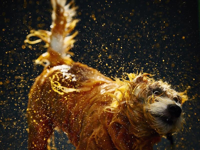 cani-dipinti1