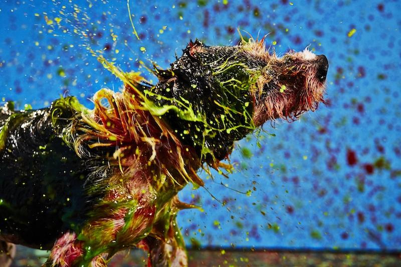 cani-dipinti2