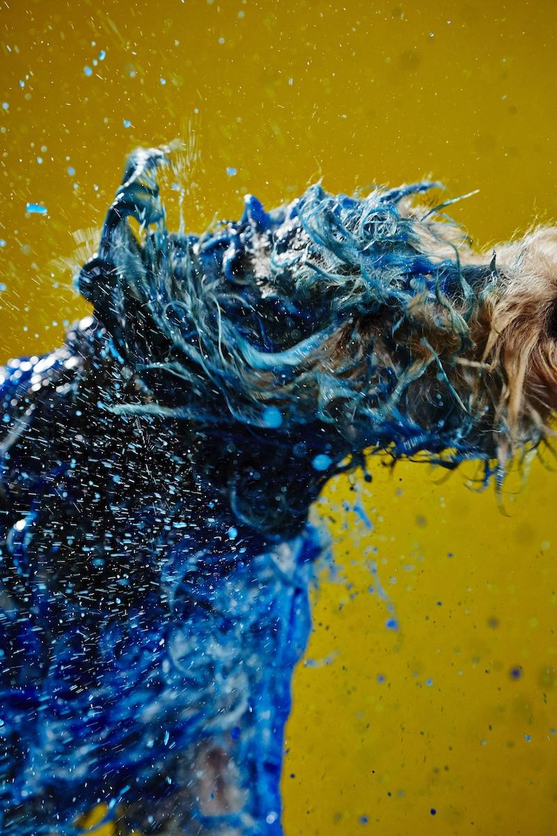 cani-dipinti4