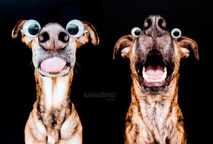 expressive-dog-portraits-elke-vogelsang-10
