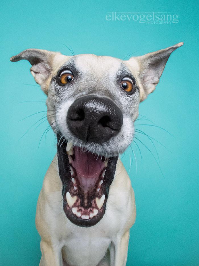 expressive-dog-portraits-elke-vogelsang-6