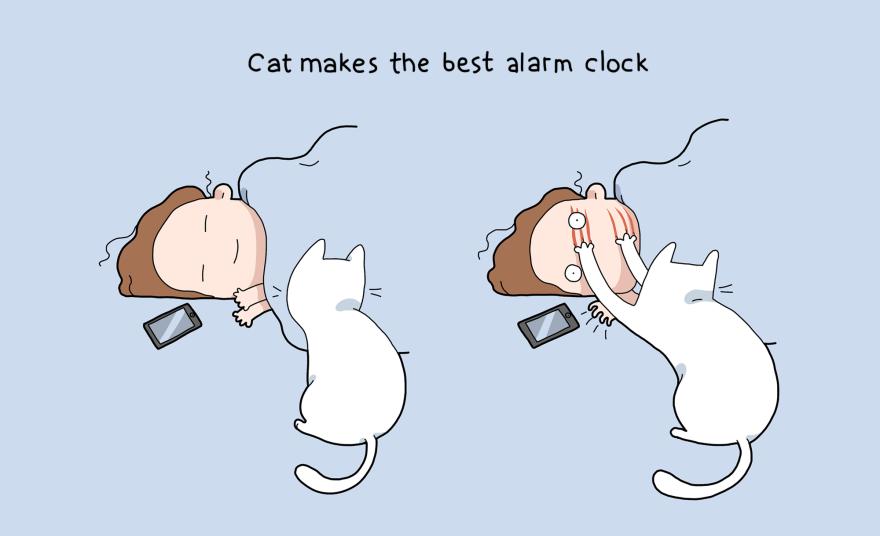I gatti sono la miglior sveglia che possiate avere
