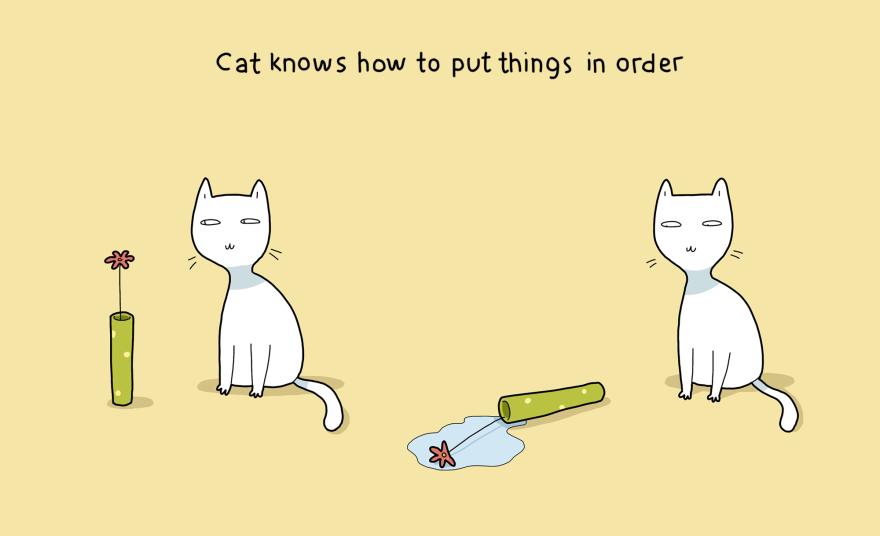 I gatti sanno come fare ordine