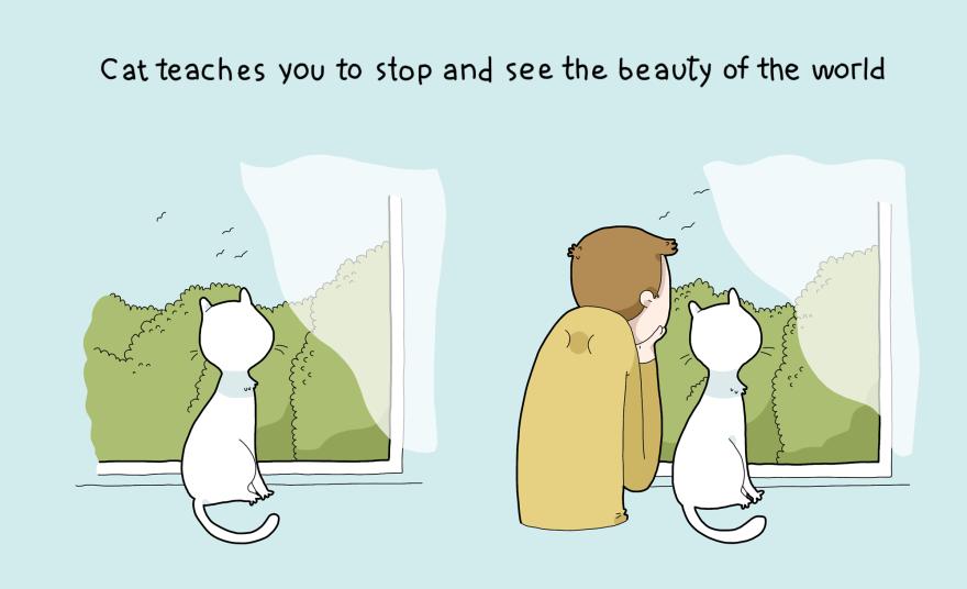 I gatti vi insegneranno a fermarvi per ammirare la bellezza del mondo