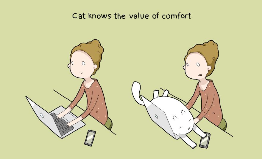 I gatti sanno dove si sta davvero comodi
