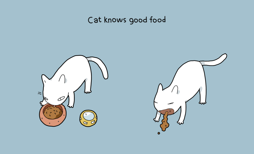 I gatti sanno qual è il buon cibo