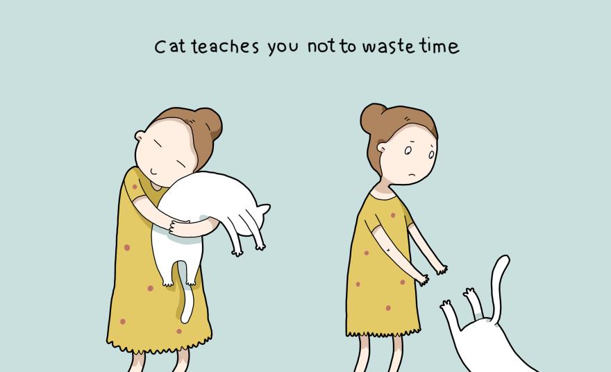 I gatti vi insegnano a non perdere tempo