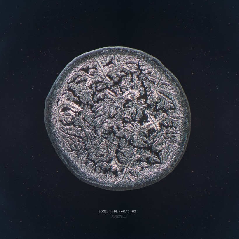 larme-amis-microscope-01-820x820