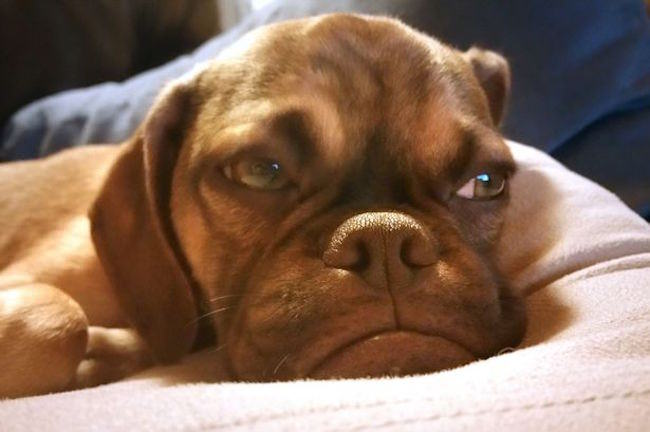 PAY-Grumpy-Earl-the-dog-3-650x432