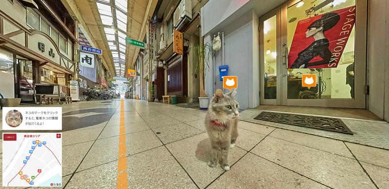 google-cat1