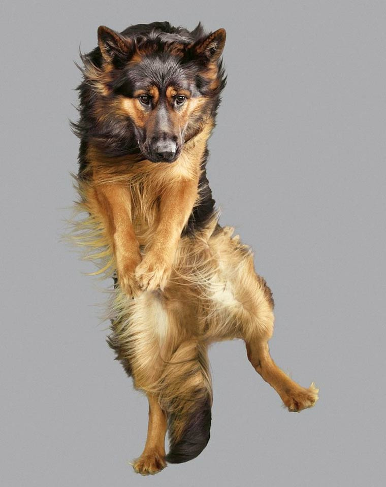 Julia-Christe-Flying-Dogs-10