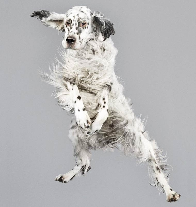 Julia-Christe-Flying-Dogs-5