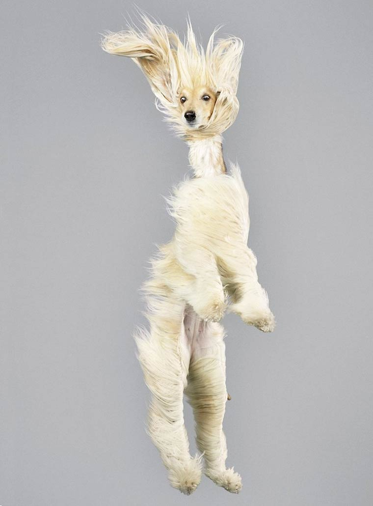 Julia-Christe-Flying-Dogs-9