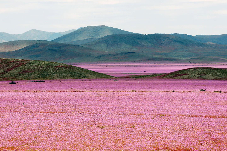deserto-cile-fb