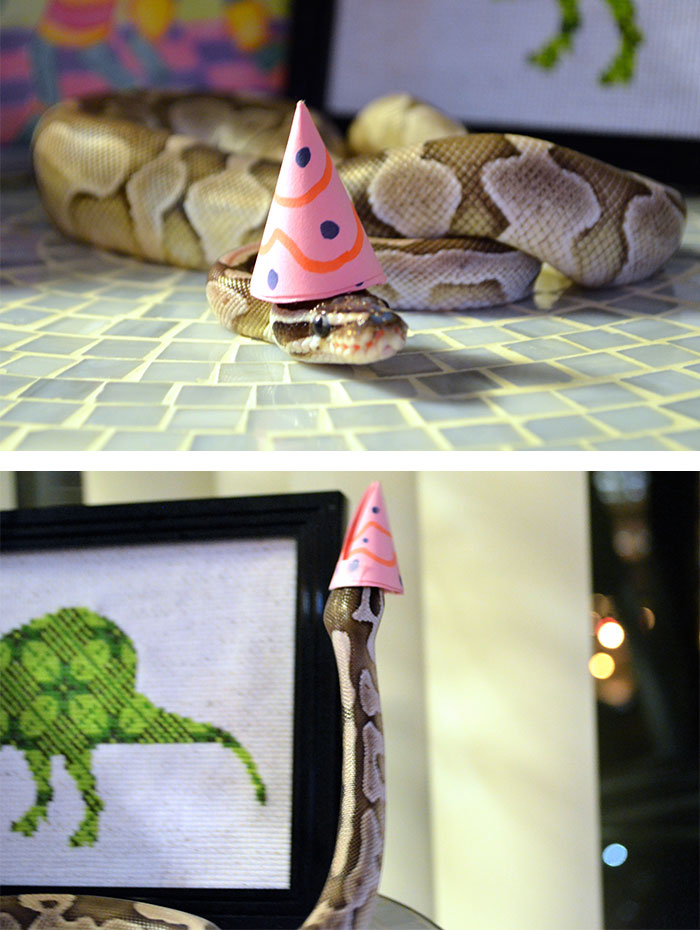 cute-snakes-wear-hats-134__700