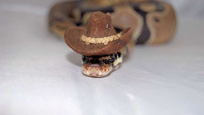cute-snakes-wear-hats-87__700