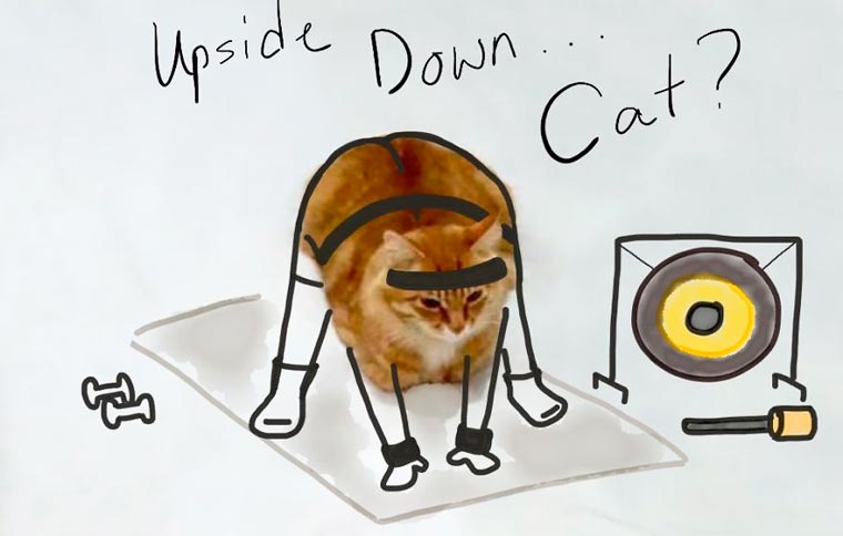 Doodle-Cat-10