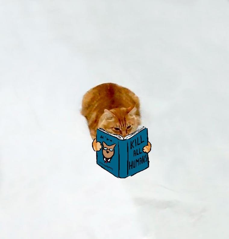 Doodle-Cat-12