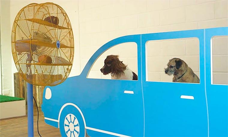 Dominic-Wilcox-exposition-pour-chiens-11