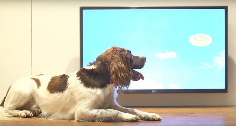 Dominic-Wilcox-exposition-pour-chiens-3