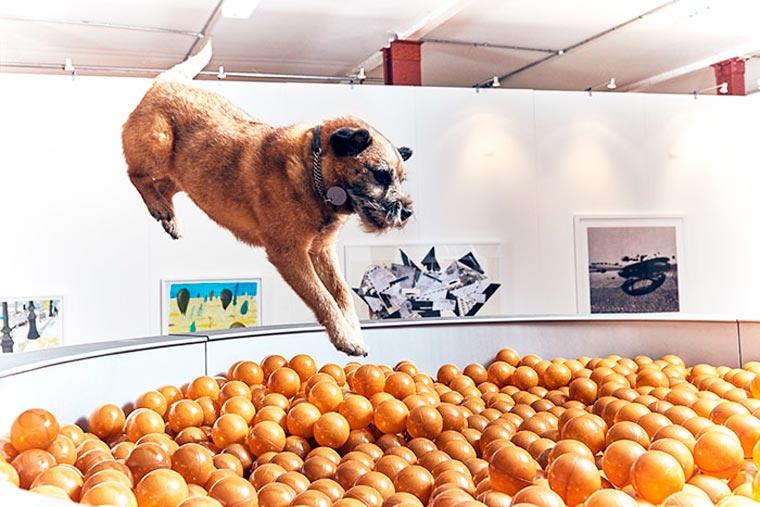 Dominic-Wilcox-exposition-pour-chiens-5