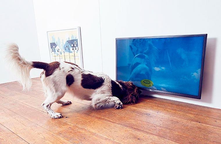Dominic-Wilcox-exposition-pour-chiens-7