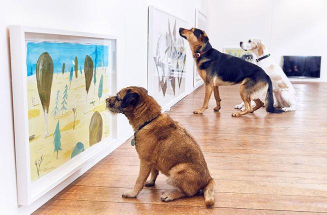 mostra-per-cani-maxw-654