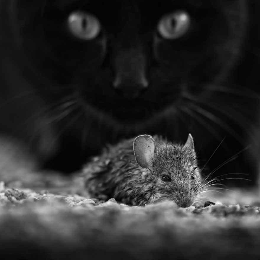 mysterious-cat-100-57c035cfeedeb__880