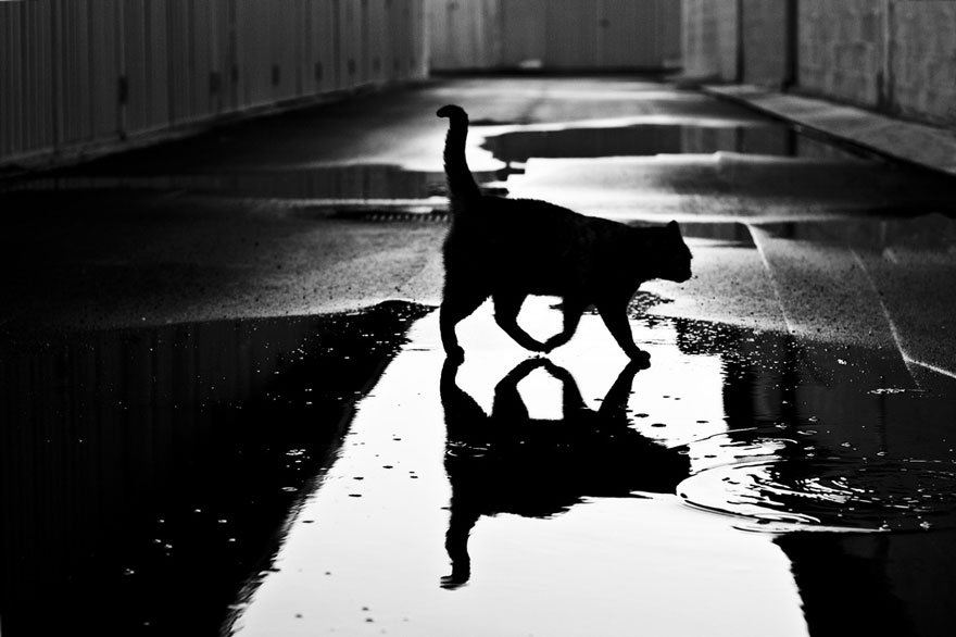 mysterious-cat-photography-black-and-white-20-57bffb077ad7b__880