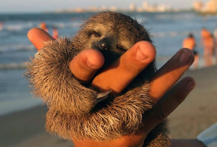 cute-sloths-101-5807684db1058__700
